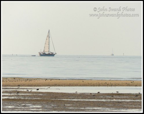 Sailboat from Bunche Beach